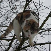 Кошка на дереве :: Елена Павлова (Смолова)