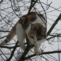 Кошка на дереве :: Елена Смолова