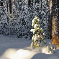 А впереди ещё не мало зим... :: Лесо-Вед (Баранов)