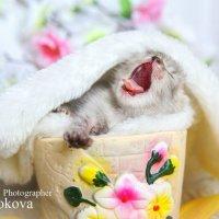 Доброе утро! :: Наталья