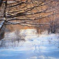 В зимний лес :: Cергей Дмитриев