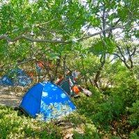 Палаточный лагерь :: Люша