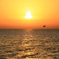 Полет на закате . :: valeriy khlopunov