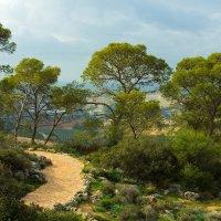 Бейт-Шемеш, Израиль :: Игорь Герман