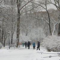 Снег идет, и все в смятеньи... :: Елена Гуляева (mashagulena)