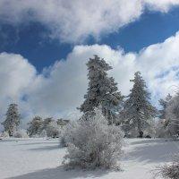 прекрасный зимний день :: İsmail Arda arda