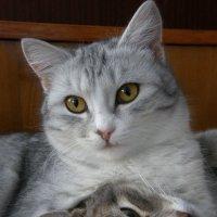 Муся и Вася :: Андрей