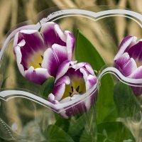 Букет из тюльпанов :: Игорь Сикорский
