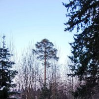 февраль :: Svetlana Plasentsiia