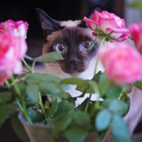 My cat and rose......) :: Олег Князев