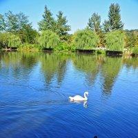 Озеро у замка :: Mikhail