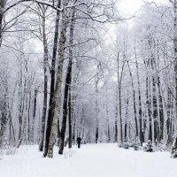 Зимняя прогулка :: Ольга Рощектаева