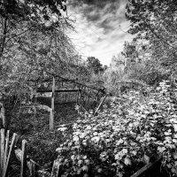 Заброшенный сад :: Вадим Смирнов