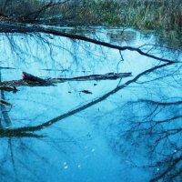 Отражение  на льду....последние осение деньки :: Александра Полякова-Костова