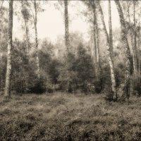 Таинственный лес... :: марк