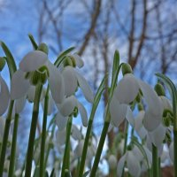Я жду весну! :: Galina Dzubina
