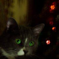 эти глаза напротив..... :: Ксения смирнова