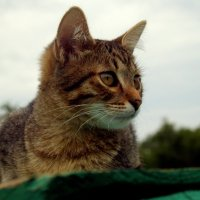 Котёнок :: Михаил Шор