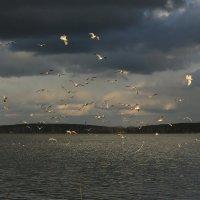 чайки :: Наталия Ремизова