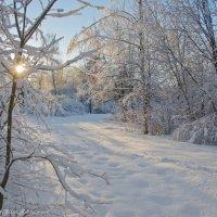 Морозным,солнечным днём. :: Виктор Евстратов