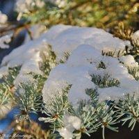 Заискрился снег на еле. :: Виктор Евстратов