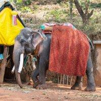 Прогулочный слон :: Виктор Куприянов