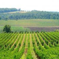 Toscana In My Heart :: Виктор | Индеец Острие Бревна