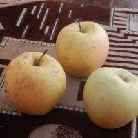 Яблочки прошлого урожая :: Лилия Дубчак