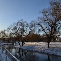 Вдоль реки. :: zoja
