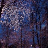 Зимняя ночь в Молочном :: Валерий Талашов