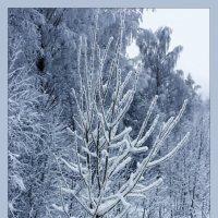 А лес стоит загадочный :: Лариса Шамбраева
