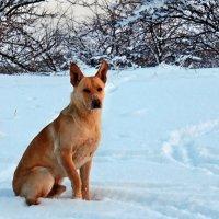 Экскурсия в Гадюкино зимой (43) :: Александр Резуненко