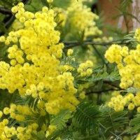 Весны пробужденья цветок... :: СветЛана D