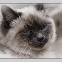 И снова всё тот же Кузьма Львович -«Кошки очарование мое!» :: Shmual Hava Retro