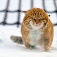 рыжий кот :: Анна Юдникова