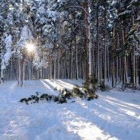 Солнце в лесу :: Angelika Faustova