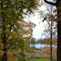 Парк у Меньшикова дворца :: Ольга