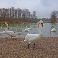 В феврале на озере :: Galina Dzubina