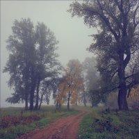 Тихие осенние туманы.. :: Алексей Макшаков
