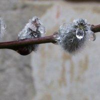 Запахло весной!;-) :: НаталиЯ ***
