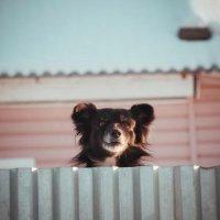 Собачка :: Ольга Елина
