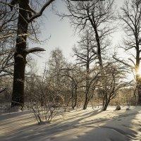 Ботанический сад :: Александр Степанов