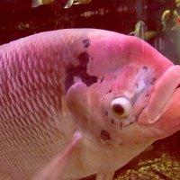 Открывает рыба рот... :: Татьяна Осипова(Deni2048)