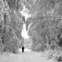 Прогулка в зимнем лесу :: Николай Белавин