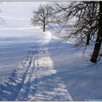 Лишь бы дерево лыжню не перебежало)) :: Андрей Заломленков