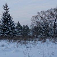 Зимний лес :: Евгений Иванов