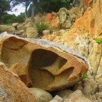 Сетка мелких морщинок,коренастый овал. Сколько цыпок-песчинок он на коже собрал… :: Елена Ярова