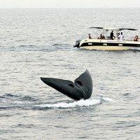 Сафари на мигрирующих китов 5/5 :: Асылбек Айманов