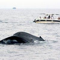 Сафари на мигрирующих китов 3/5 :: Асылбек Айманов
