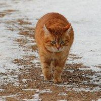 Кот учёный. :: Нина